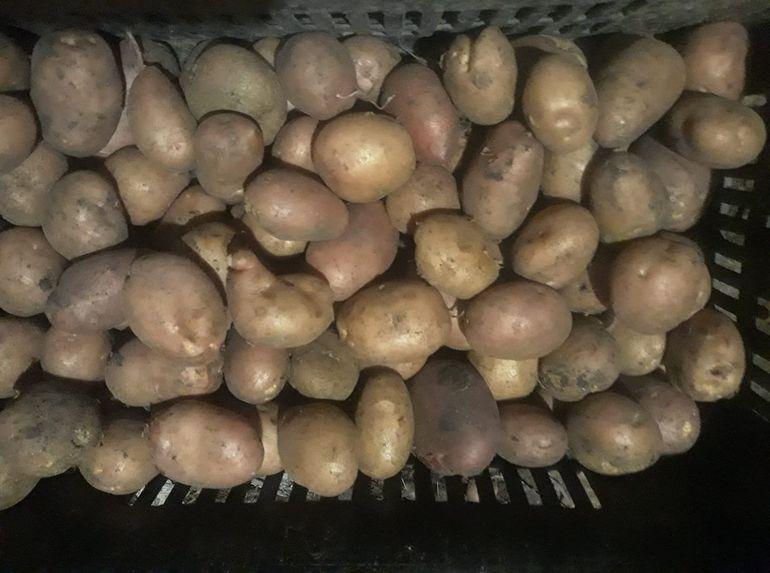 Un sac cu cartofi a ucis o familie întreagă. Când devin cartofii periculoşi pentru organismul uman