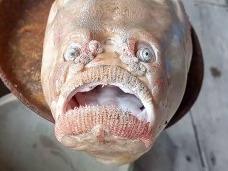 """Descoperire șocantă în Thailanda! Un pește neobișnuit a fost prins de către un pescar: """"Când am văzut peștele înfricoșător..."""""""