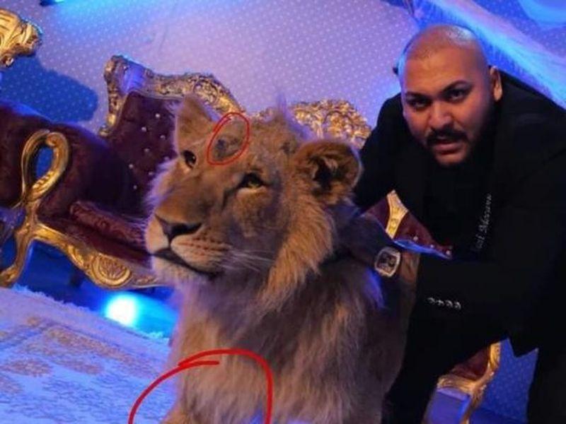 Unde este leul folosit de Dani Mocanu în videoclip