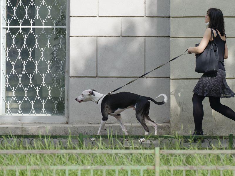Femia și-a scos câinele la plimbare