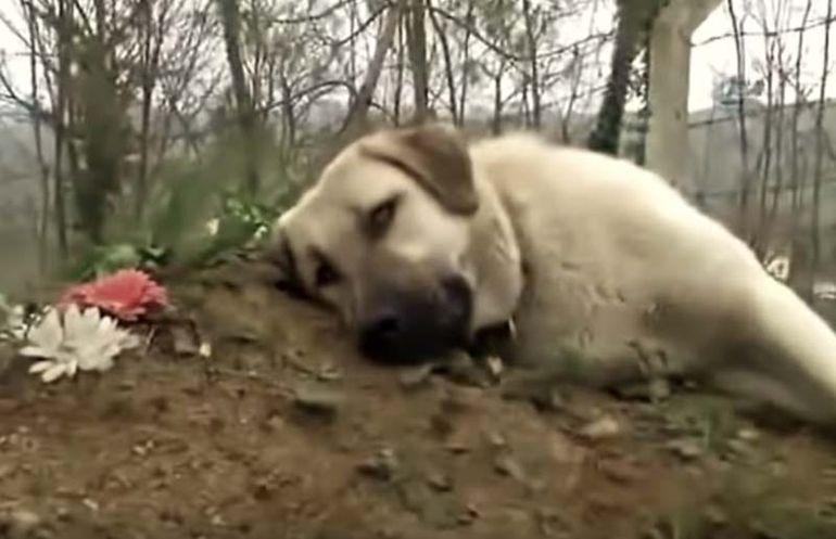 Un câine fuge în fiecare zi de acasă pentru a merge la mormântul stăpânului său! Povestea impersionantă a lui Zozo