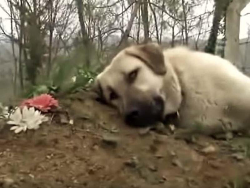 Câinele care merge în fiecare zi la mormântul stăpânului său