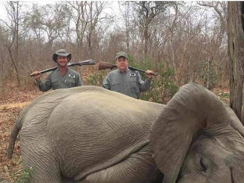 Îți dau lacrimile! Au omorât doi elefanți și i-au văzut ca pe un trofeu