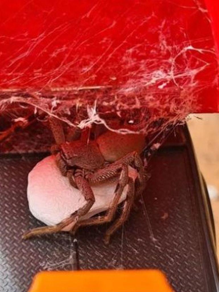 O bunică a avut parte de șocul vieții! Nepotul ei se juca cu o jucărie în care trăia un păianjen gigantic!