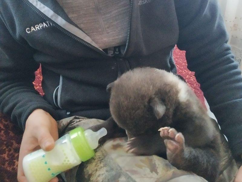 Ursulețul nou-născut, salvat de membrii ONG-ului.