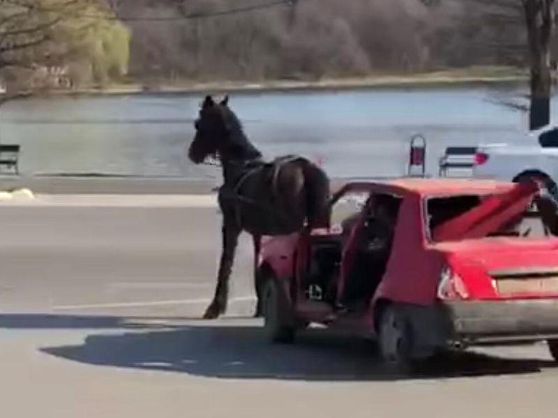 Un cal chinuit să tragă după el o mașină