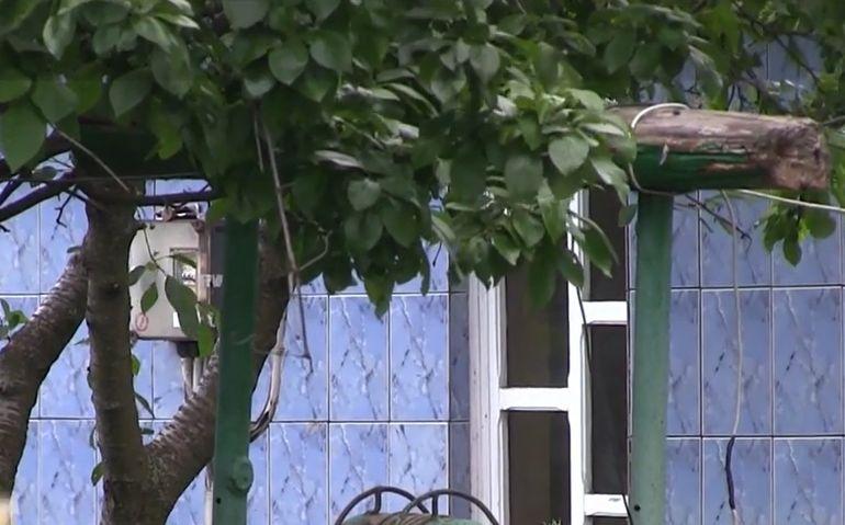 Andrei, un elev de 14 ani, s-a spânzurat de cireșul din spatele casei. Tatăl lui îl certase că stă prea mult pe tabletă