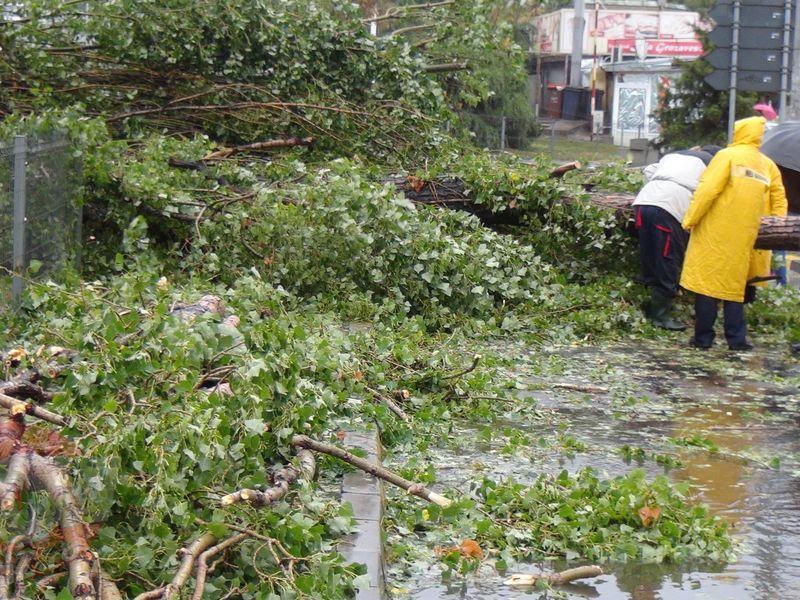Un copac batran s-a prabusit chiar la intrarea unui hipermarket din Capitala