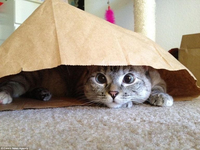 Ea e cea mai urmarita pisica pe Instagram - Uite cum arata animalutul pe care zilnic il apreciaza peste un milion de persoane