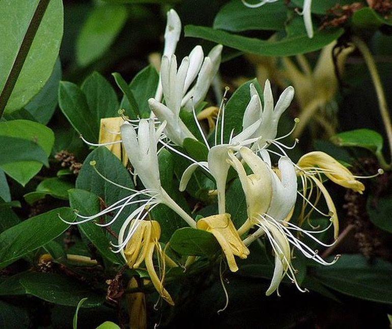 Palma Maicii Domnului, planta care are proprietati vindecatoare miraculoase
