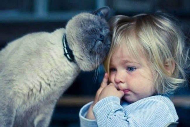 Top 10 Cele Mai Potrivite Rase De Pisici Pentru Copii Wowbiz