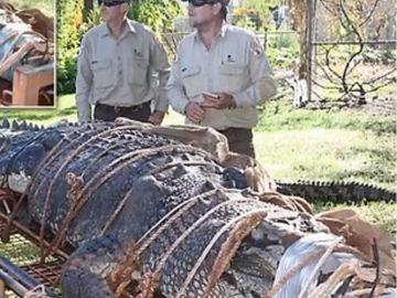 Momentul socant in care autoritatile au pus mana pe un crocodil de 600 de kilograme! Ce s-a intamplat apoi
