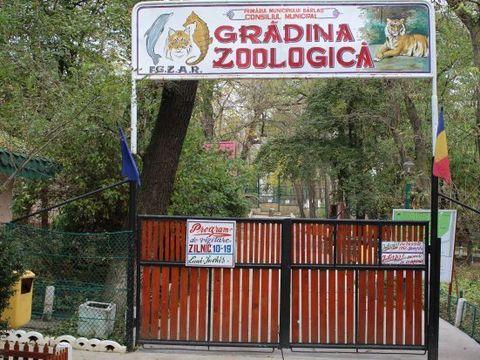 O fată din Bârlad a vrut să-şi facă un selfie cu ursul de la Zoo. Cum a reacţionat animalul când a văzut-o aproape de el