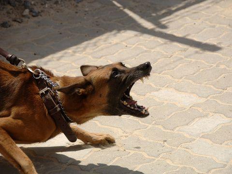 Ce faci dacă te muşcă un câine? Când te poţi trata acasă?