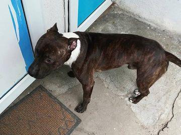 Un tânăr disperat că şi-a pierdut câinele a oferit o maşină recompensă pentru găsirea lui!