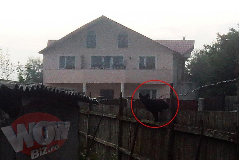 Video | Semne rele inainte de parastasul mamei Monicai! Fenomene extreme deasupra casei in care se afla surorile Gabor la Bacau! Pisica neagra si-a facut aparitia pentru a treia oara