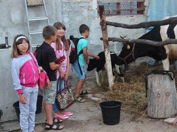 """Situatie incredibila pentru familia """"Micului Hercule""""! Tatal lui Giuliano Stroe sustine ca primaria vrea sa ii execute silit vaca din curtea casei!"""