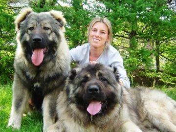 Cei mai mari caini din lume! Ei sunt uriasii care ne pazesc