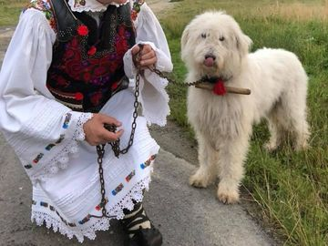 Cristian Pomohaci a cantat gratis la un festival desfasurat la Sibiu! Prestatia fostului preot a fost apreciata de public