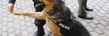 Hotii din Iasi care au omorat in bataie un batran pentru un pumn de faina au fost prinsi cu ajutorul cainilor politisti!