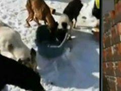 Bărbat din Braşov, acuzat de ucidere după ce a lăsat să moară peste 70 de câini în adăpostul pe care îl administra