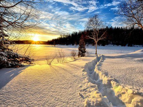 ALERTĂ METEO: Cod galben de zăpadă şi viscol în 24 de judeţe din ţară. Vânt de până la 90 de km/h