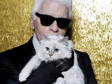 Averea lui Karl Lagerfeld va fi moștenită de pisica lui! E de neînchipuit câți bani intră în conturile acesteia