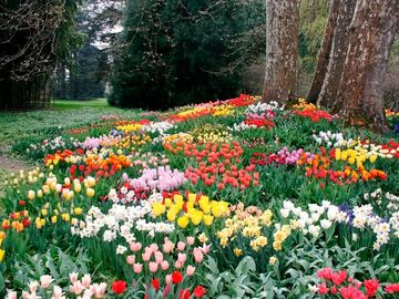 Duminica Floriilor. Nume care se sărbătoresc de Florii