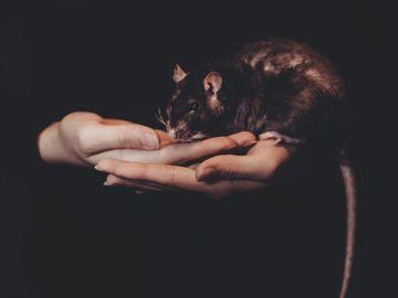 Ce inseamna cand visezi sobolani. Totul depinde de sentimentele tale. Afla semnificatia!