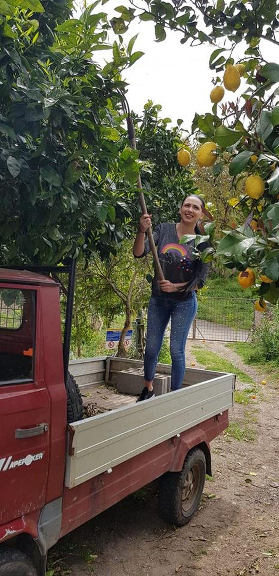 Nevasta lui Tolea Ciumac culege portocale în Sardinia FOTO