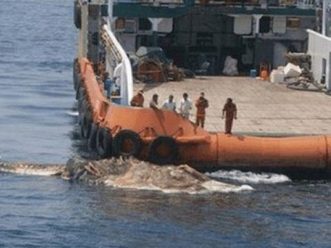 Marinarii au scos din adâncuri o creatură! Când au văzut ce era, au împietrit