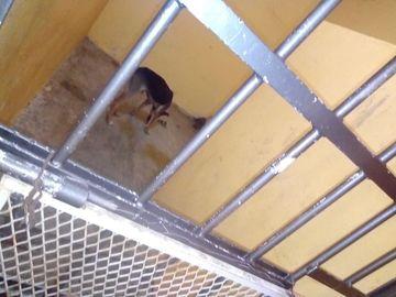 Caz halucinant: un primar a pus autoritățile să aresteze un câine! L-au luat, l-au băgat în temniță, iar ce trebuie să facă animalul ca să iasă de acolo e șocant