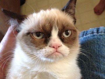 A murit Grumpy Cat, cea mai simpatică pisică de pe internet