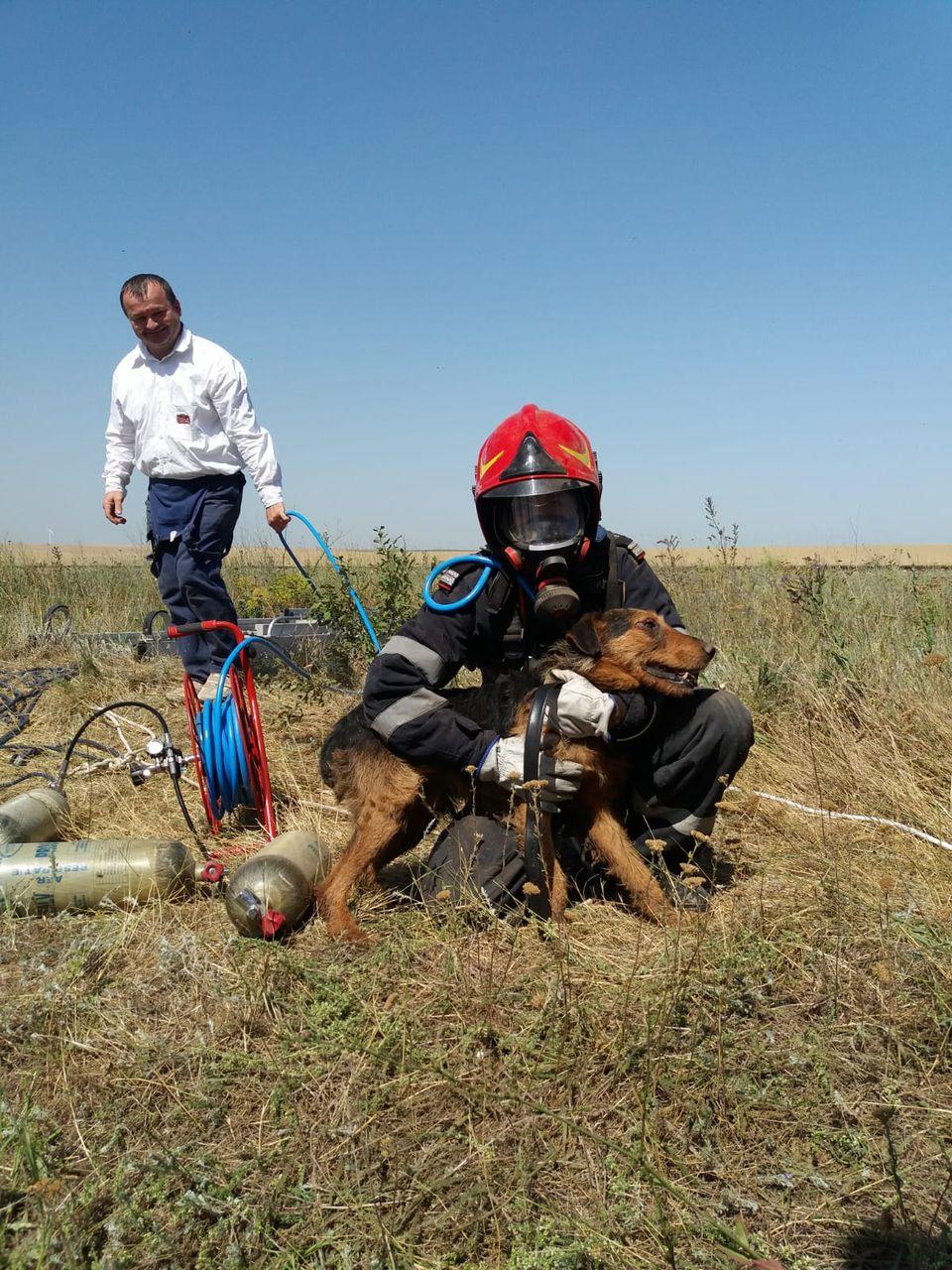 Misiune grea pentru pompierii din Medgidia! Un cățel a căzut într-o fântână adâncă de 20 de metri! Imagini emoționante