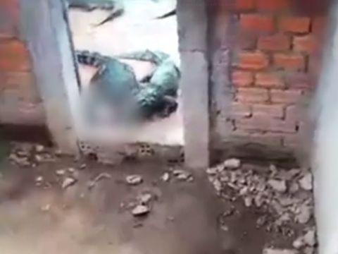 Video șocant! O fetiță  a fost mâncată de crocodili! Cum a găsit-o tatăl său