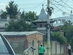 Caz șocant lângă București. Un cal a murit după ce a fost bătut cu bestialitate de stăpân! Imagini horror
