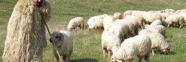 Moarte suspectă în Maramureș! Un cioban a fost găsit mort cu capul în jar noaptea trecută