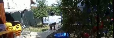 Atenție, animal periculos! O maimuță se plimbă liberă pe străzile din București! Autoritățile nu reușesc s-o prindă