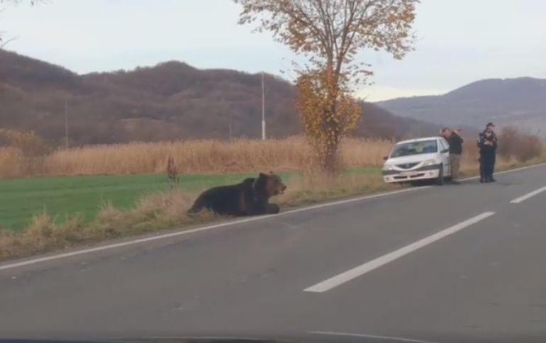 """Fetița de doi ani care se afla în mașina care a lovit ursul din Harghita are coșmaruri """"Se trezește noaptea țipând"""""""