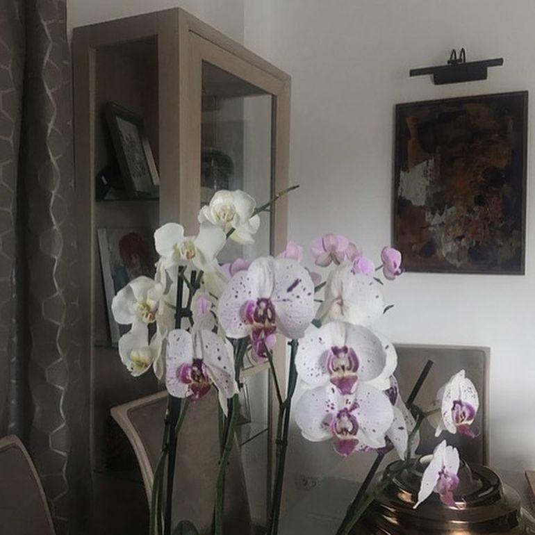 Casa în care locuiesc Alina Sorescu și Alexandru Ciucu, călcată de hoți! Toată lumea era acasă!