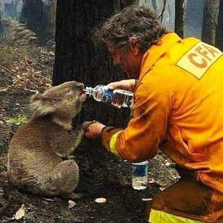 MESAJ EMOȚIONANT!  Celia este în lacrimi după incendiile uriașe care au cuprins Australia! Cântăreața locuiește de ani buni acolo