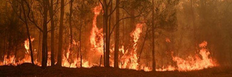 VIDEO | Apocalipsa din Australia: Cerul s-a făcut roşu ca sângele, oamenii își părăsesc locuințele. Jumătate de miliard de animale au murit