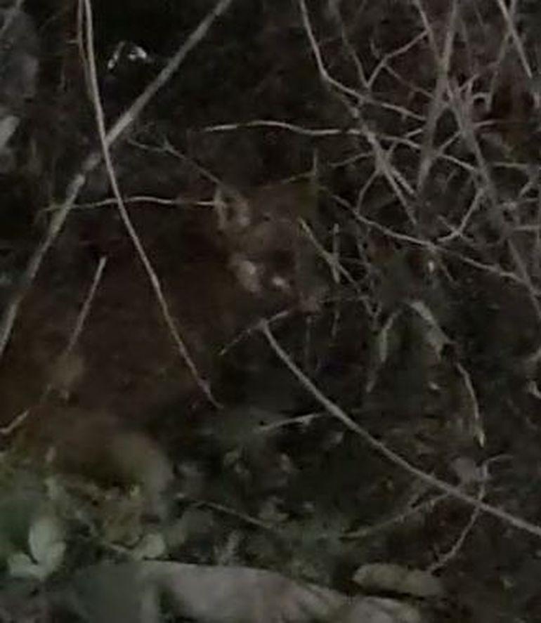 VIDEO| O vulpe rănită a fost descoperită în această seară, pe o stradă din sectorul 3 al Capitalei. Imagini șocante!