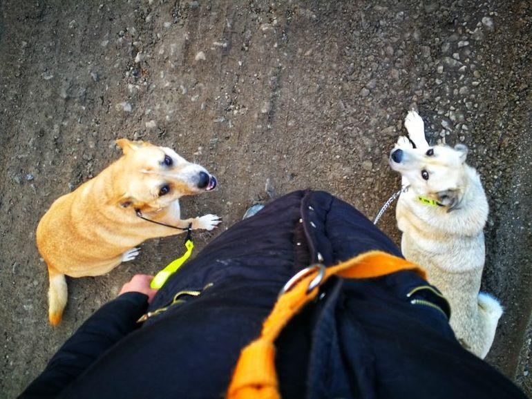 """Câinii care au vegheat la căpătâiul Cristinei Ţopescu sunt traumatizaţi! """"Cățelușele Bonnie și Sissi fac terapie de reintegrare după șocul suferit la moartea vedetei"""