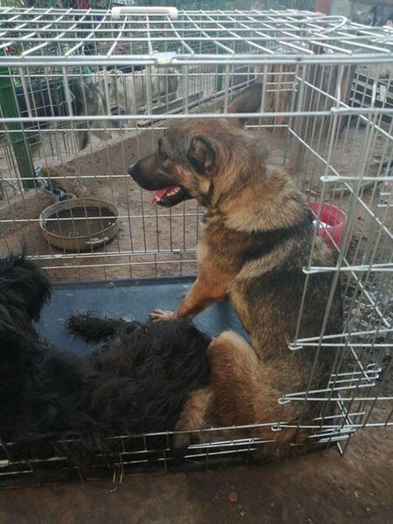 """Am aflat unde se află acum câinii lui Gheorghe Dincă, """"monstrul din Caracal""""! """"Două cățelușe erau legate cu lanțul"""" Imagini cutremurătoare"""