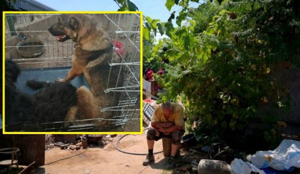 """Am aflat unde se află acum câinii lui Gheorghe Dincă, """"monstrul din Caracal"""" - """"Două cățelușe erau legate cu lanțul"""" Imagini cutremurătoare! Ce se întâmplă cu ele acum"""