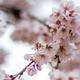 Când pică Duminica Floriilor 2021. Ce tradiții trebui să respecți în această zi