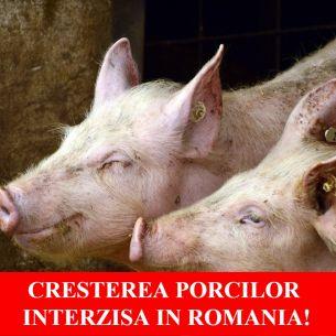 Lovitura pentru crescătorii de animale. Autoritățile interzic creșterea porcilor pentru acești români
