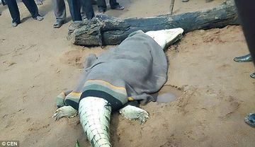 Scene horror! Satenii au omorat un crocodil urias, in cautarea unui copil disparut. Ce au gasit in interior
