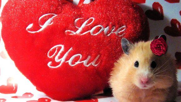 Mesaje de Ziua Indragostitilor: cum iti exprimi iubirea prin SMS de Valentine's Day